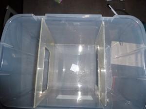 P10000403-300x225 dans terrarium